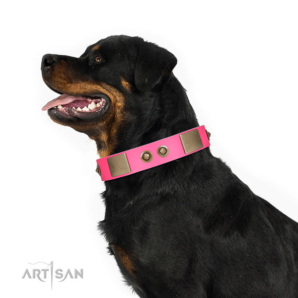 Leather Rottweiler Collar Adorned with Plates and Conchos