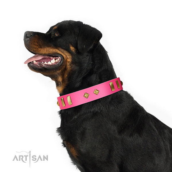 Adorned with plates and studs leather Rottweiler collar for daily walking