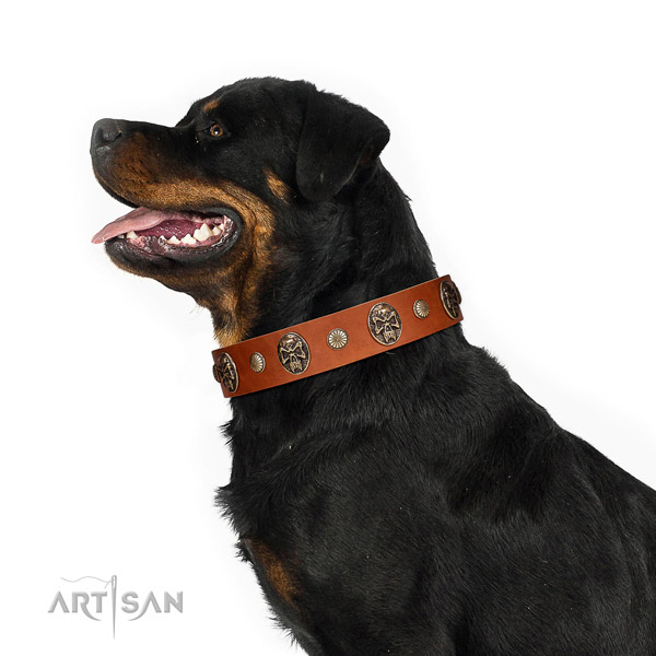 Decorated Tan Leather Belgian Malinois Collar with Riveted Medallions