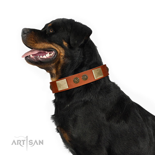 Unusual Style Tan Leather FDT Artisan Rottweiler Collar