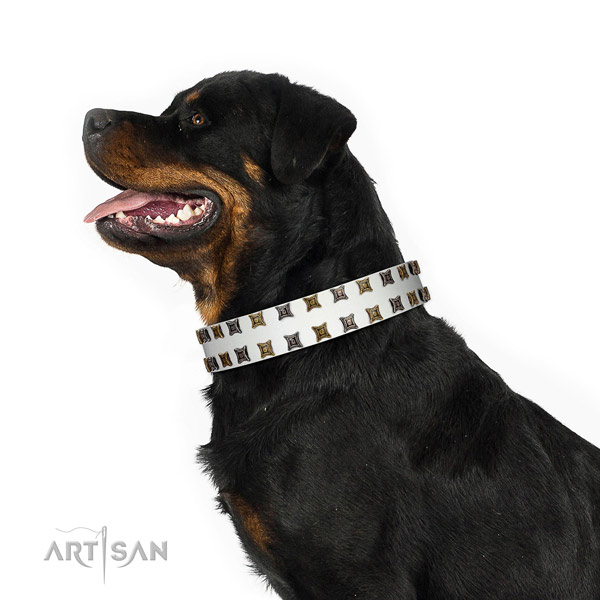 White Leather Rottweiler Collar with Mix of Square Studs
