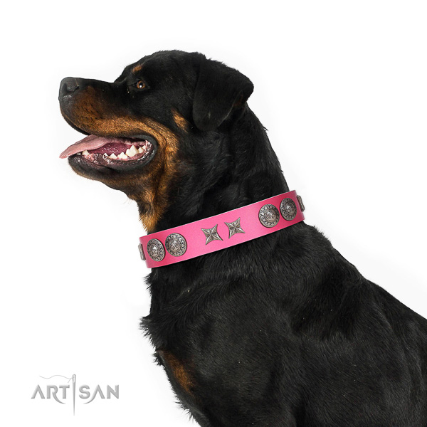Extraordinary walking pink leather Rottweiler collar with