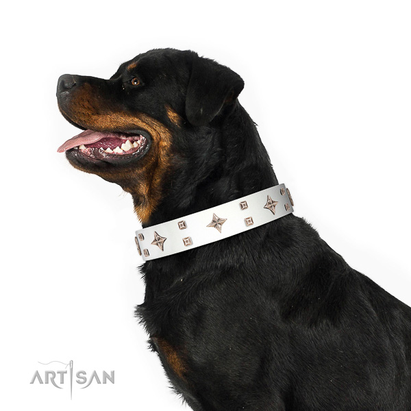 White leather Rottweiler collar at an affordable price