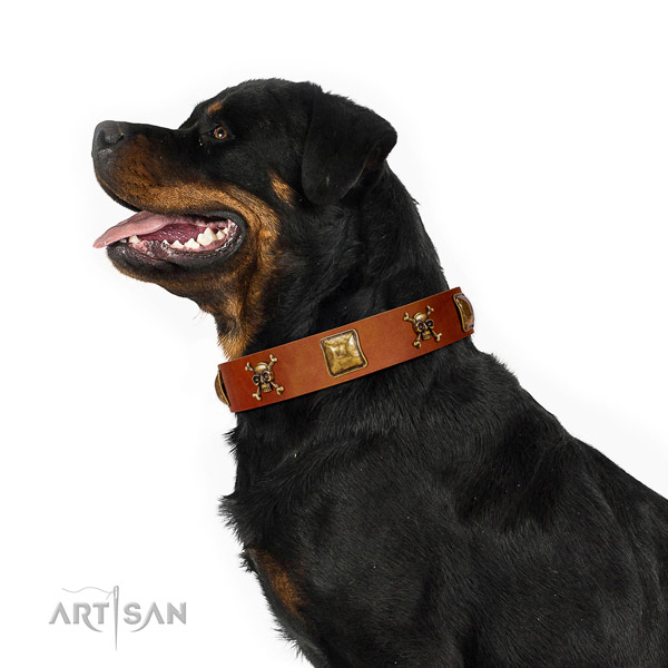 Designer tan leather Rottweiler collar has amazing look