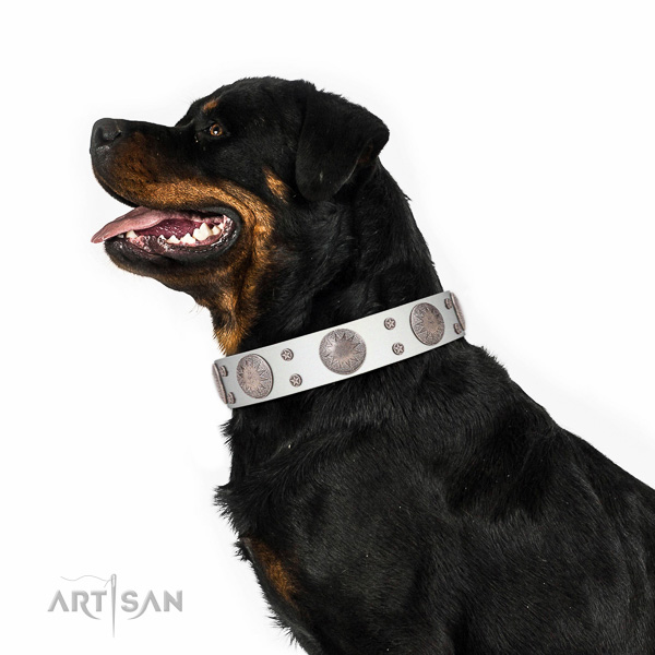 First rate white leather Rottweiler collar