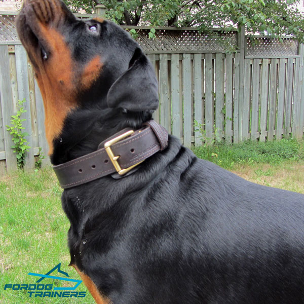Rottweiler Leather Collar with Brass Hardware