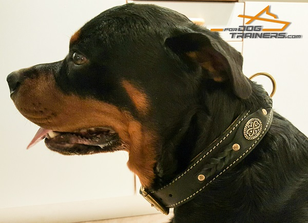 Rottweiler  Leather Collar for Awesome Look