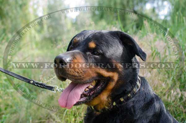 Rottweiler Dog Collar for Walking