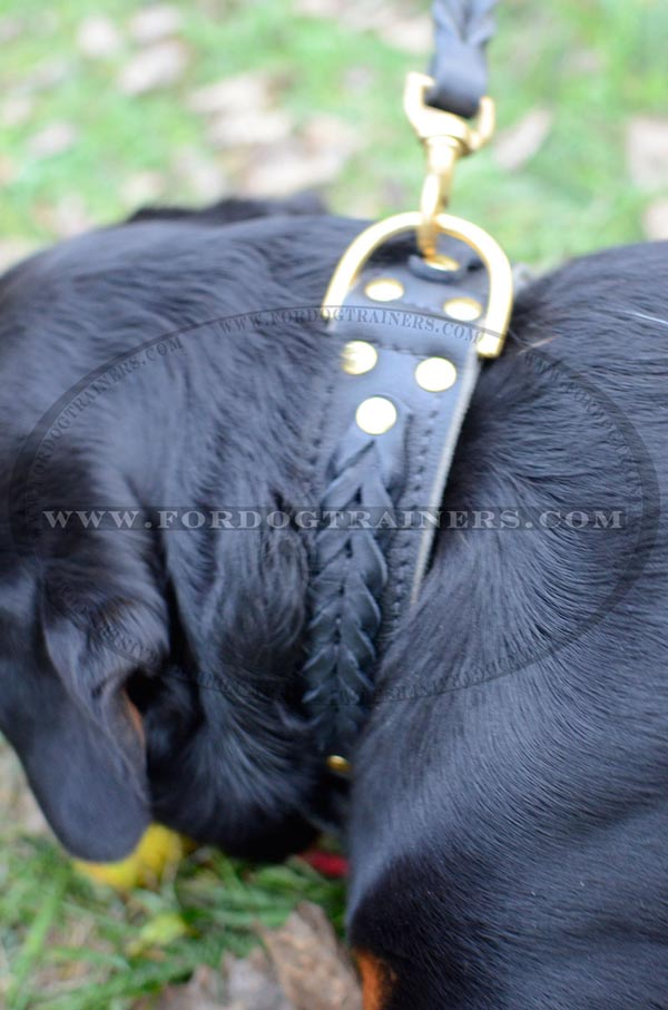 Rottweiler Dog Collar Designer Work - Exclusive