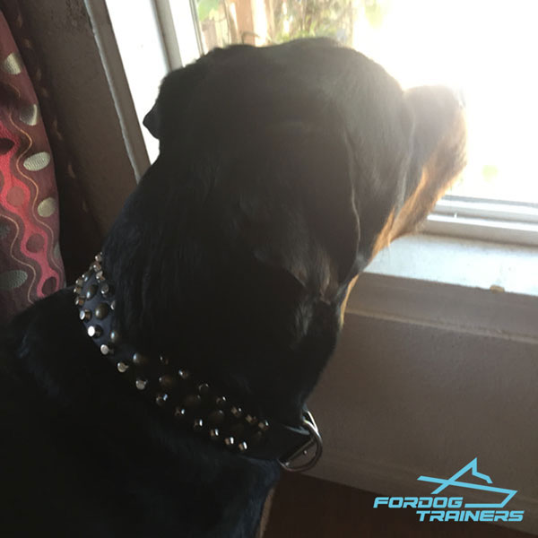 Fancy decorated leather dog collar with spikes studs