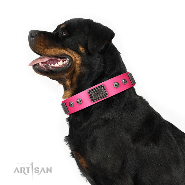 Rottweiler stylish walking dog collar of exquisite quality leather