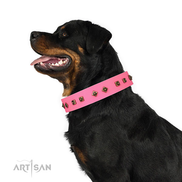 Rottweiler basic training dog collar of incredible quality genuine leather