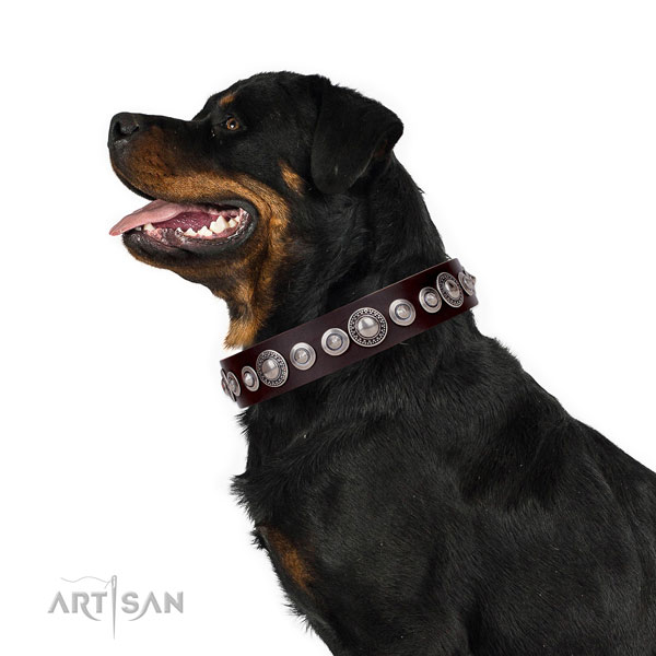 Rottweiler fashionable natural genuine leather dog collar with studs