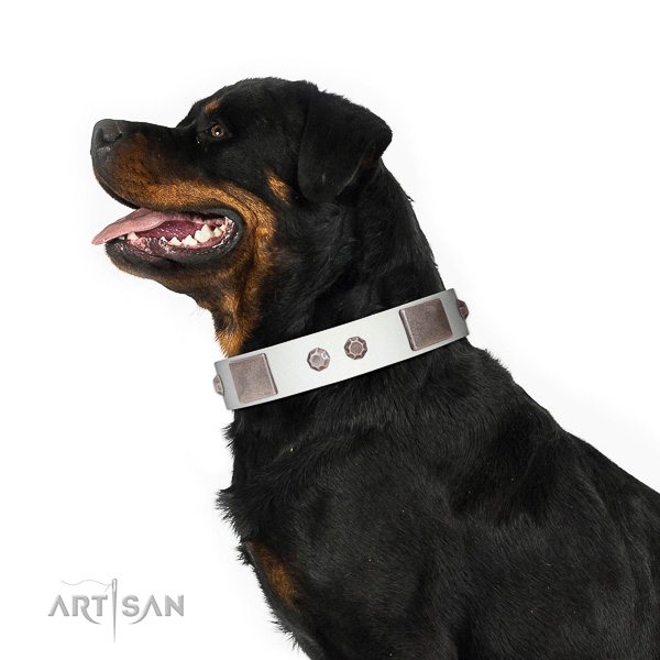 Tremendous Rottweiler Collar of Selected Leather
