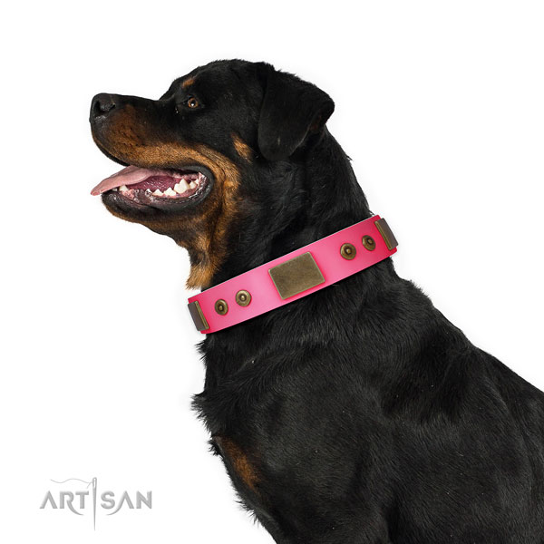 Rottweiler daily walking dog collar of significant quality leather