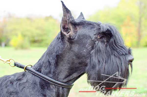 Leather Choke Belgian Malinois Collar for Obedience Training