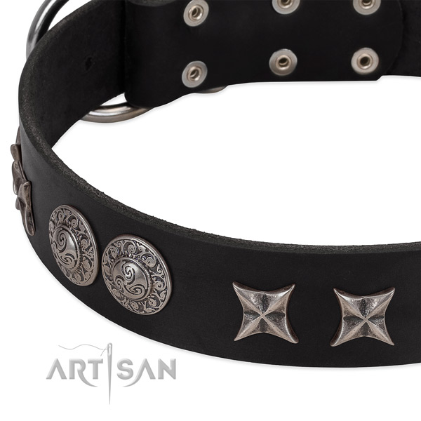 Black leather dog collar with elegant decorations