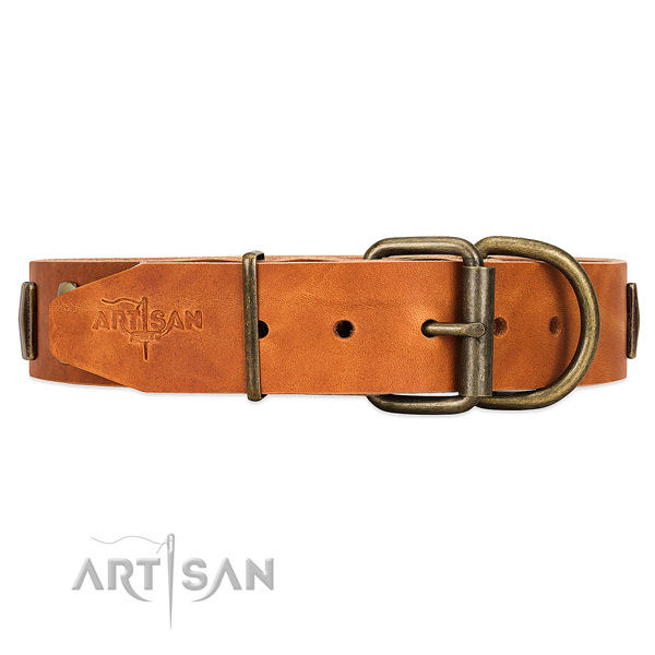 Comfy tan leather dog collar with duly riveted fittings