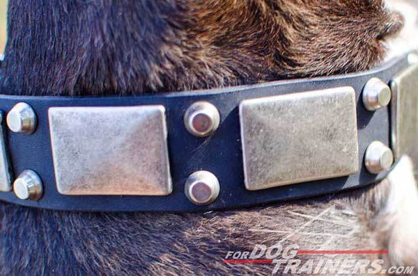 Silver-Like Decorations on Leather Pitbull Collar
