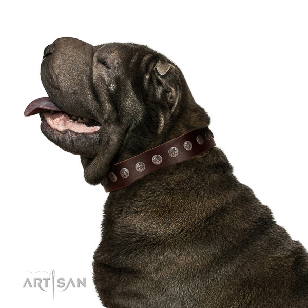 Extraordinary walking brown leather Shar Pei collar with chic decorations