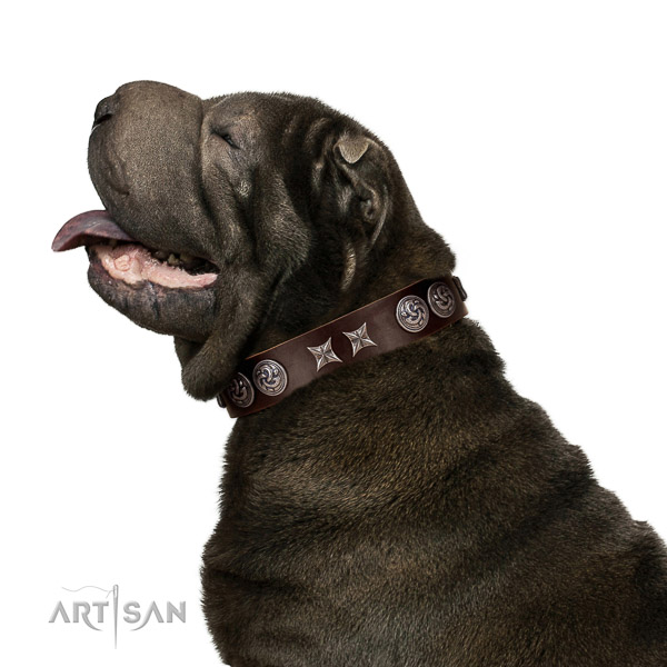 Extraordinary walking brown leather Shar Pei collar with