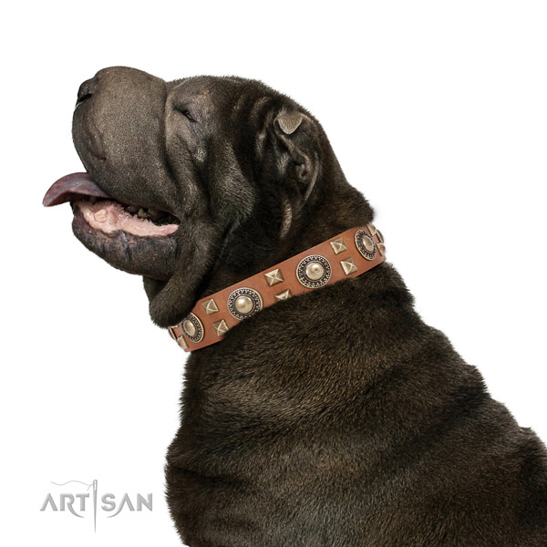 Extraordinary walking leather Shar Pei collar with chic decorations