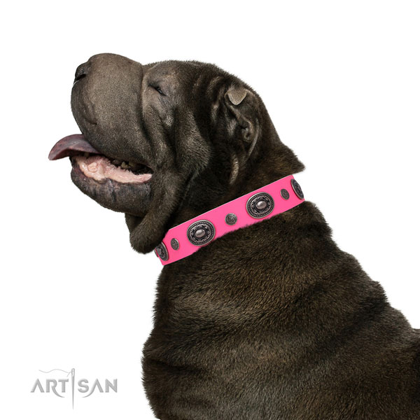 Shar Pei handmade full grain leather dog collar with adornments