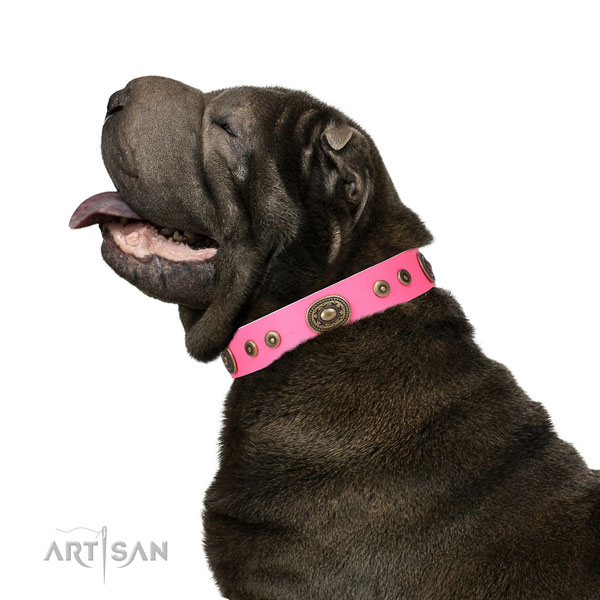 Shar Pei extraordinary genuine leather dog collar with studs