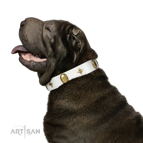 Daily walking Shar Pei  collar of exceptional quality genuine leather