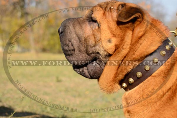 Well-made Sharpei Leather Dog Collar