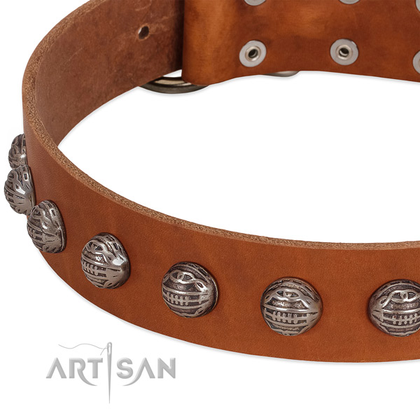 Tan leather dog collar with chic decorations