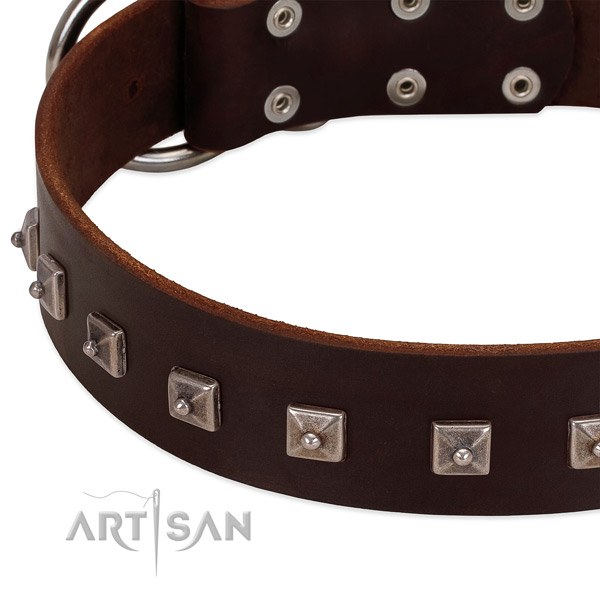 Brown leather dog collar with posh decorations