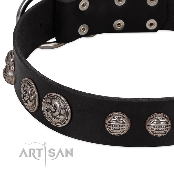Black leather dog collar with riveted ornate conchos