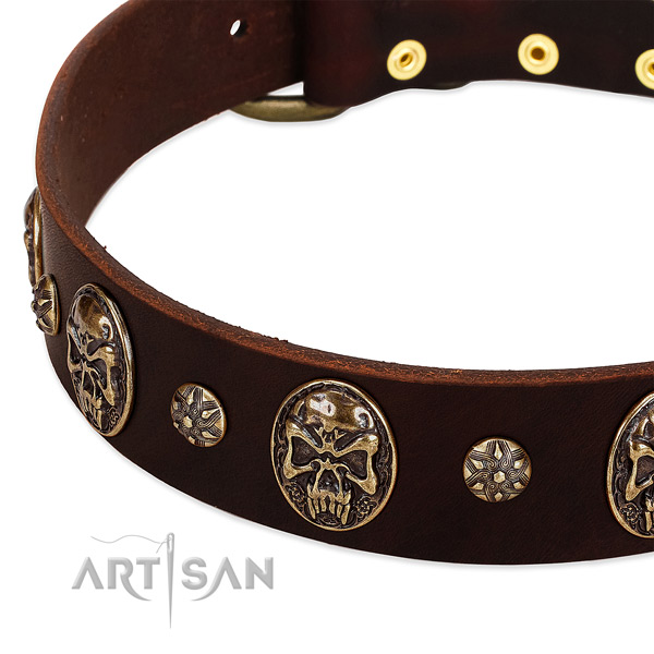 Brown dog collar with studs and medallions