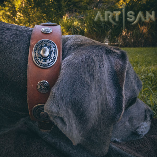 Super Styl;ish Great Dane Collar with Smoothed Edges