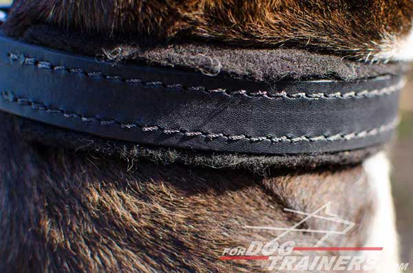 Soft Padding on Leather Pitbull Collar