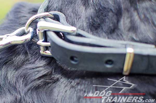 Nickel Buckle on Spiked Dog Collar Leather