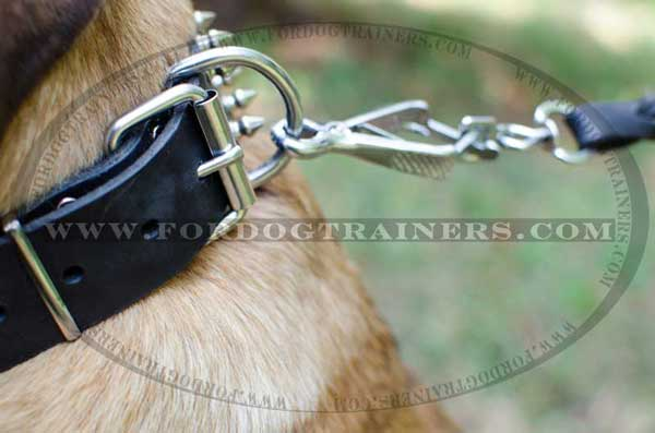 Dog Collar with Nickel-Plated Fittings