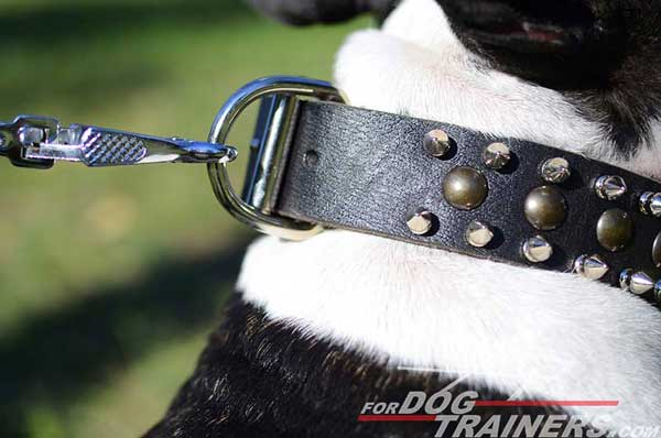Spikes and Studs on Leather Dog Collar