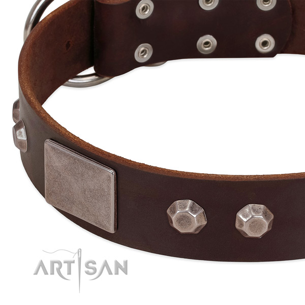 Brown leather dog collar with cool modern decorations