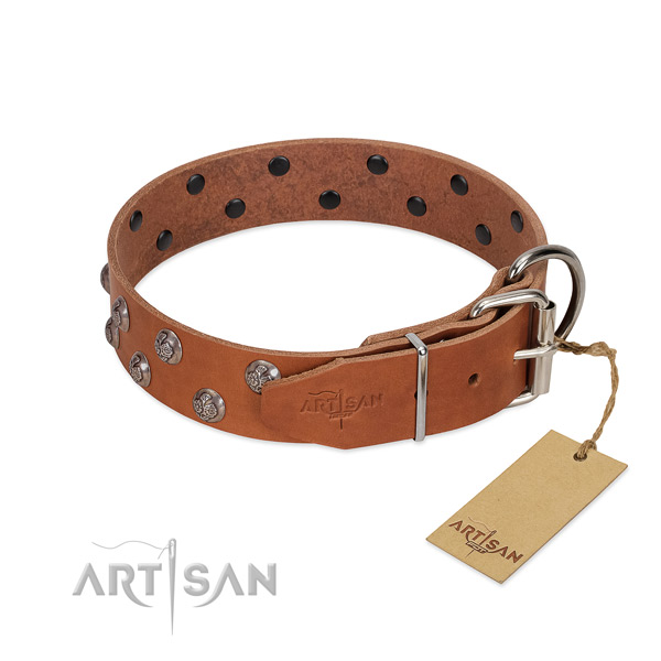 Tan leather FDT Artisan dog collar with chrome-plated fittings