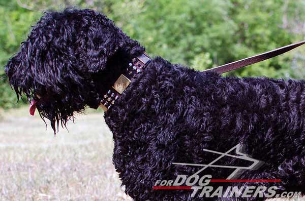 Beautiful Black Russian Terrier Collar Leather