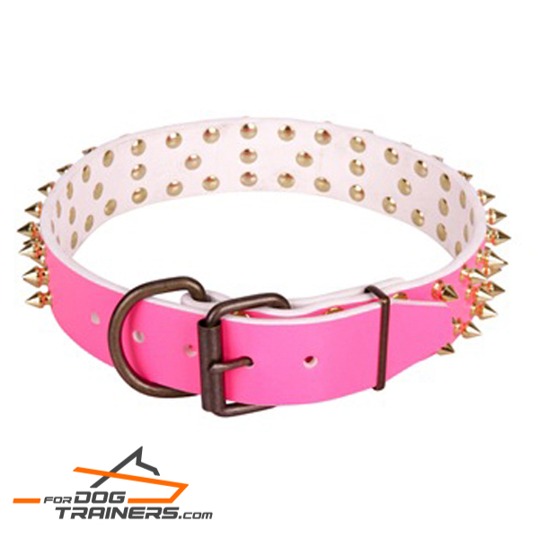 Studded leather dog collar with brass plated