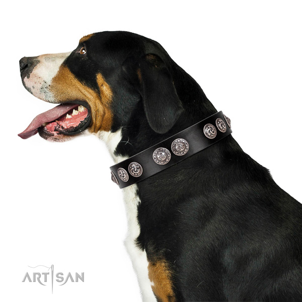 Classy quality leather Swiss Mountain dog collar