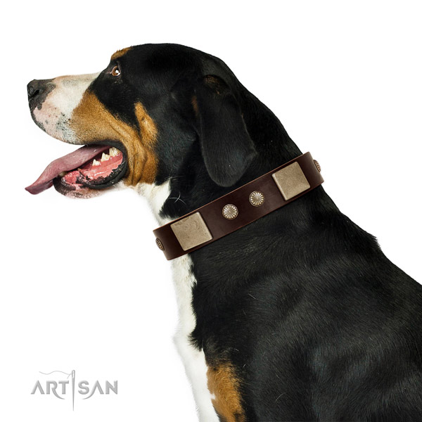 Leather Swiss Mountain Dog Collar with Durable Hardware