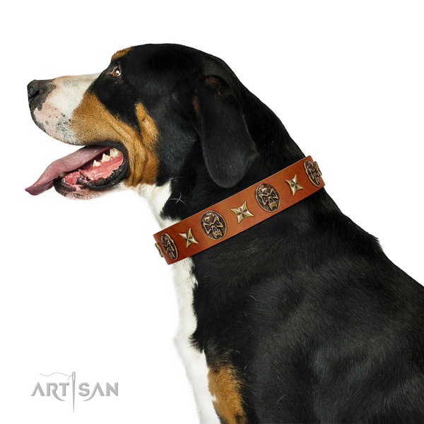 Comfortable leather Swiss Mountain Dog collar for