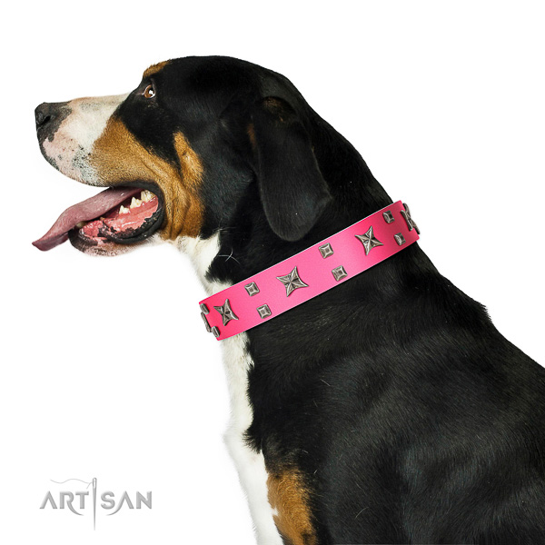 Extraordinary walking pink leather Swiss Mountain Dog collar with modern decorations