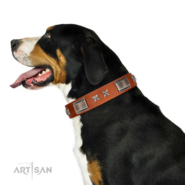 Soft tan leather Swiss Mountain Dog collar for daily use