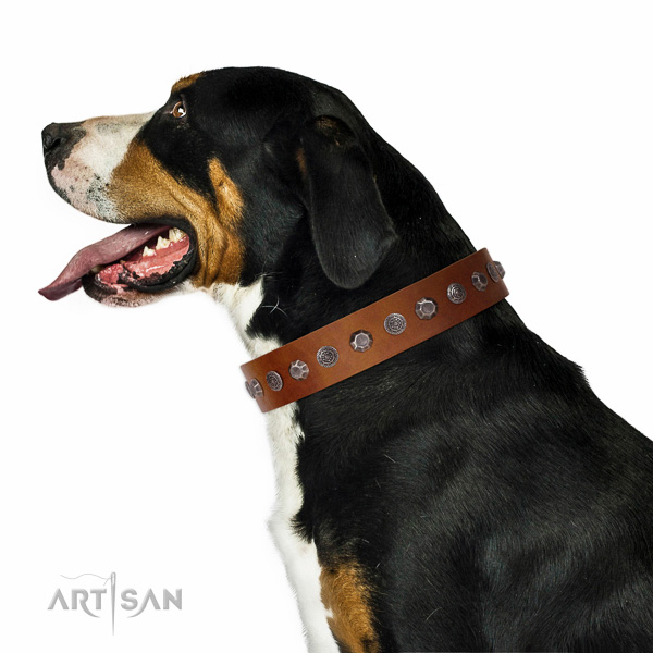 Extraordinary walking tan leather Swiss Mountain Dog collar with chic decorations