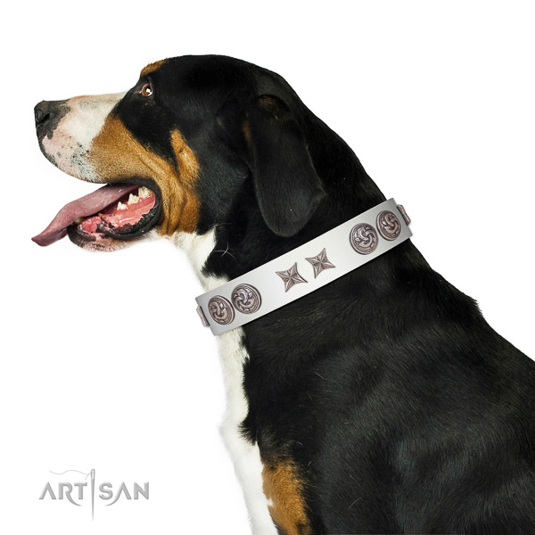 Extraordinary walking white leather Swiss Mountain Dog collar with chic decorations